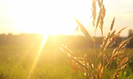 Eterna bendición: La restauración en Jesús
