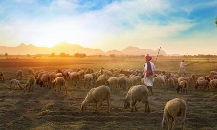 Cómo ser un buen pastor como el Buen Pastor