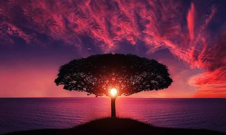 Comiendo del árbol de la vida: Creados para comer y beber en su presencia